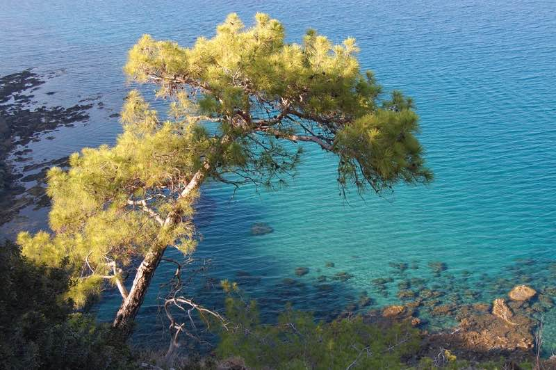 Akamas Wild Beauty in Paphos Travel Guide
